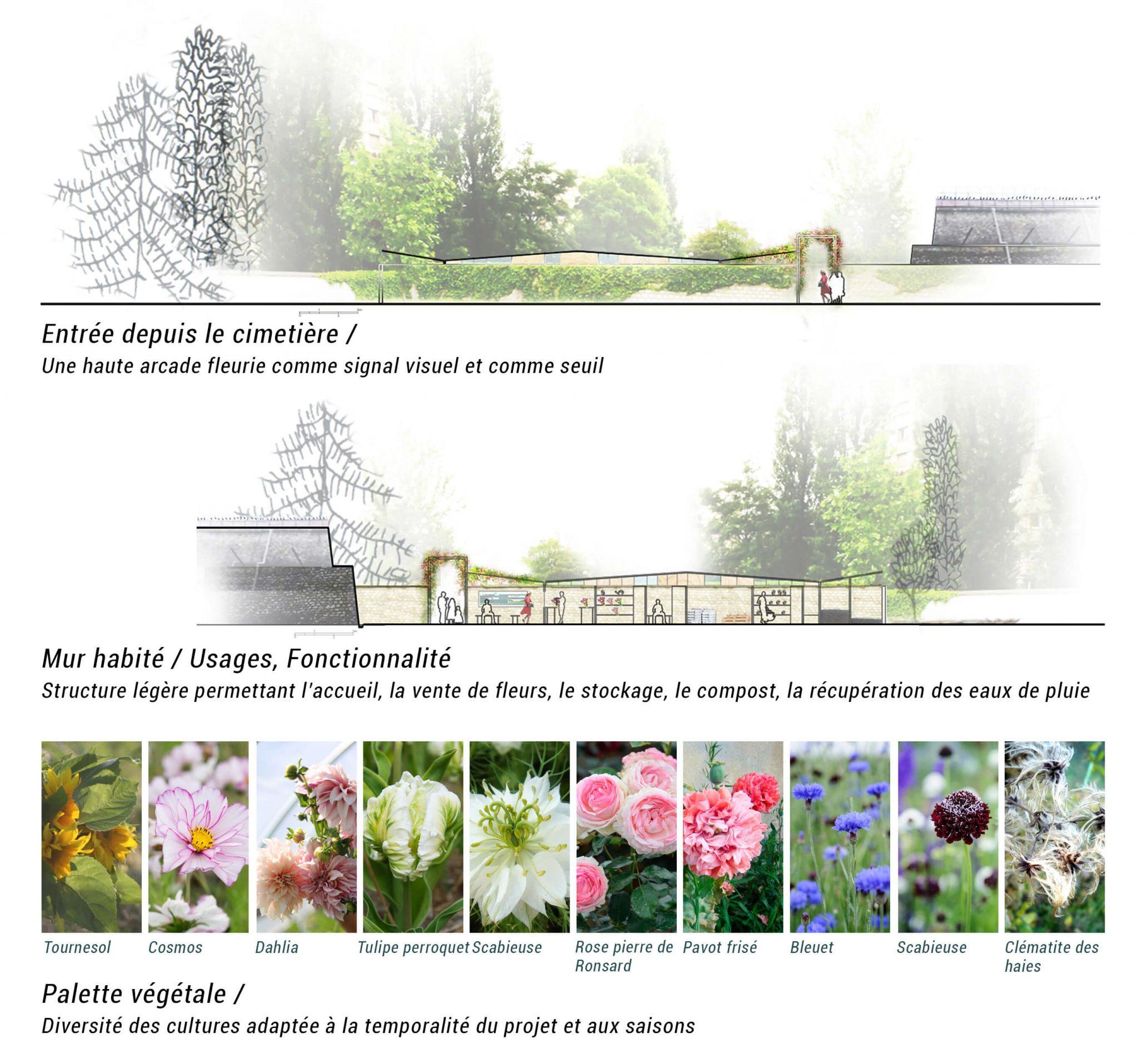 Flore Urbaine
