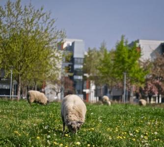 gestion animaux en ville