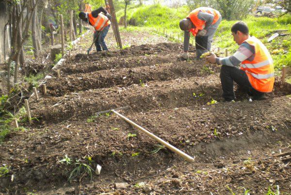 travaux agricoles urbains